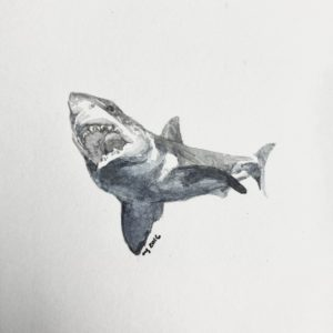 Maggie Green Great White Shark watercolor 4x4 195