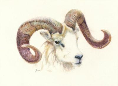 Josee Severino Ram'n Up colored pencil 12x16 700