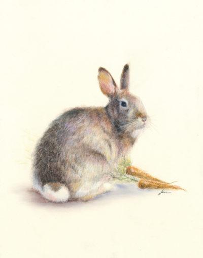 Josee Severino Wild Hare colored pencil 11x14 700