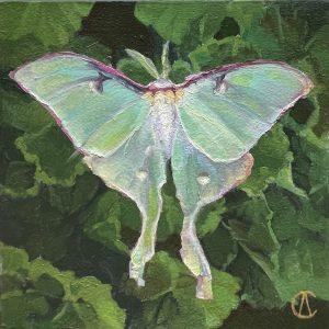 Cynthia Arieta Luna Oil 6x6 250